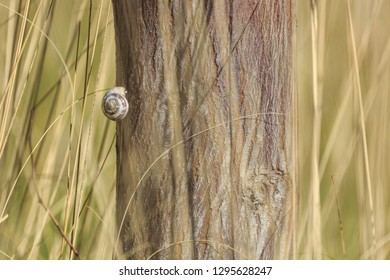 Small white snail hanging on a tree in a dry high grass