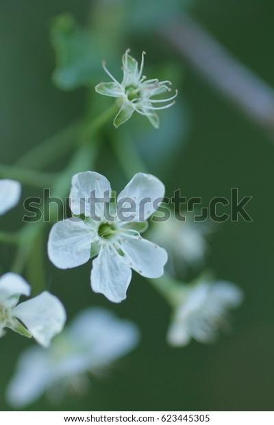 small white spring tender flower in nature