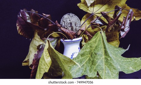 Small white vase with Greek nut and autumn dry leaves on black background, autumn symbols
