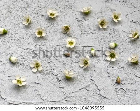 Small White Wax Flowers On Grey Stock Photo Edit Now 1046095555