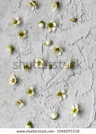 Small White Wax Flowers On Grey Stock Photo Edit Now 1046095558