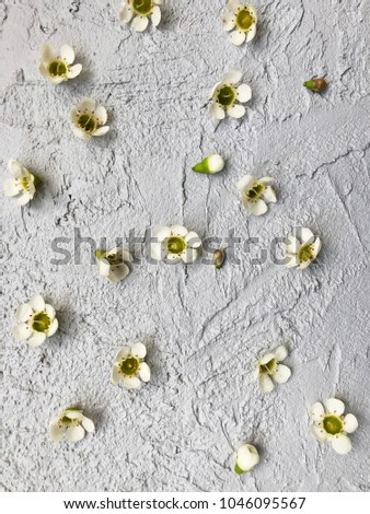 Small White Wax Flowers On Grey Stock Photo Edit Now 1046095567