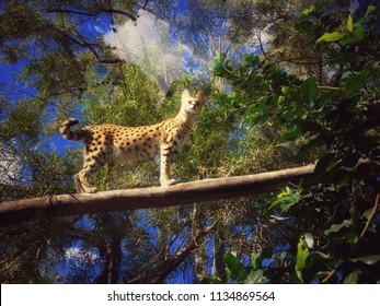 Small wild cat on tree