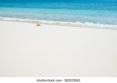Small wild crab on clear sky over sea beach. Summer holiday relax background with copy space.