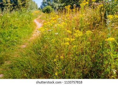 Small winding path up the hill. It is in the middle of a hot summer day. The sun is shining brightly. The wild flowers in nature bloom abundantly in all kinds of colors.