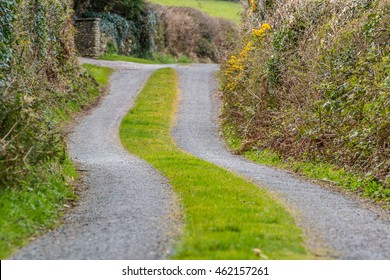 Small winding road in Ireland with grass growing in the middle