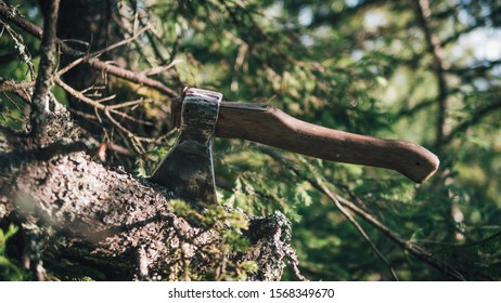 a small wooden axe stuck in an old tree, collecting firewood in the forest, on a hike. Against the background of green forest, blurred focus