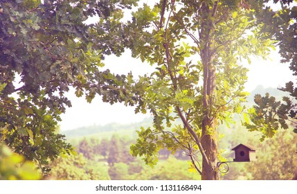 Small wooden bird house in the trees