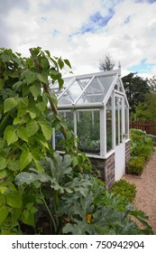 Small wooden Greenhouse in English vegetable garden.
