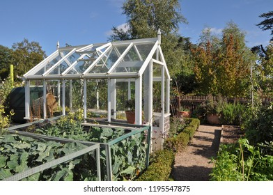 Small wooden greenhouse takes pride of place vegetable plot.