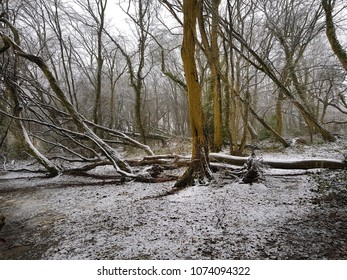 Small woodland in essex after a light snow