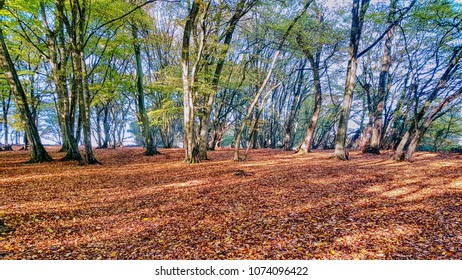 small woodland in October - Essex
