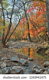 A small woodsy river. An autumn.