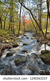 A small woodsy river. Early autumn.