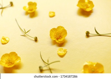 Small yellow Buttercup flowers on a bright yellow background. Floral, repeating pattern, decorative ornament