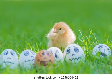 Small yellow chick and Smile, sad, panic, sick and crying egg characters with playful style in beautiful sunlight. Mental health concept. Focus on chick