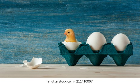 Small yellow chicken hatching from the easter egg on blue vintage background in the navy blue eggs holder