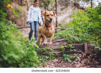 Small yellow Dog on a forest trail with a people walking in the background