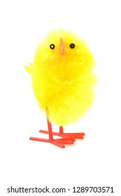 Small yellow easter chicken looking up, against a white background
