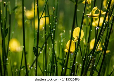 small yellow floers on green stems