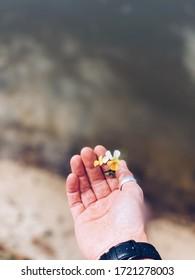 petite fleur jaune à la main