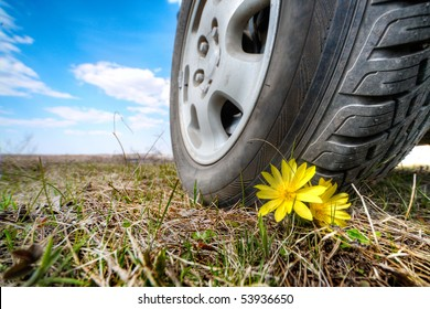 small yellow flower under big car wheel