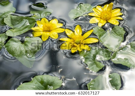 Small yellow flowers green leaves on stock photo edit now small yellow flowers with green leaves on water surface mightylinksfo