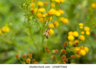 Small yellow and green flowers in the sumer with a bee drinking from the flower