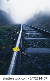 A small yellow leaf is on the mystical tracks