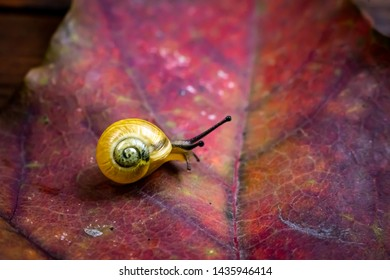 a small yellow snail on the autumn leaf. macro