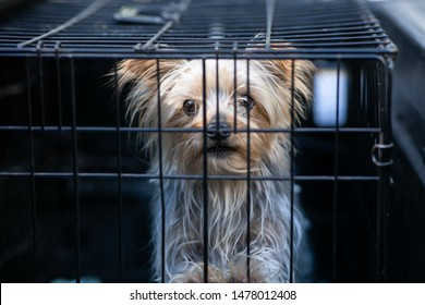 Humane Society Images, Stock Photos & Vectors | Shutterstock