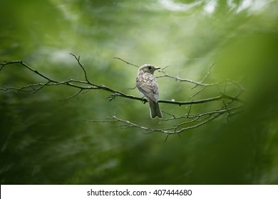 A small young bird sits on a branch covered in spider webs.