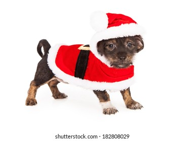 A small young puppy wearing a red Santa Claus Christmas outfit