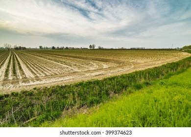 small young seedlings growing in cultivated fields in the plains in the countryside of Emilia Romagna in Italy