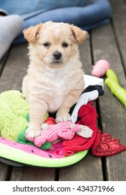 Small Young Terrier Mix Puppy Sitting on Abundance of Various Toys