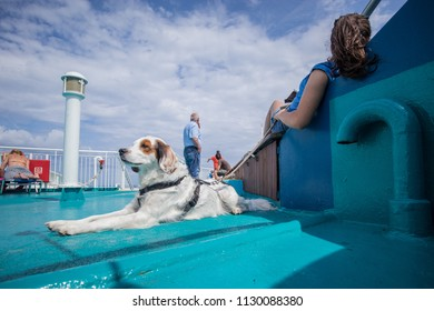 A small young white and brown dog sitting on a deck of a ferry with his owner resting mehind him. Dog lying down on a green or blue surface of a ship and waiting patiently.