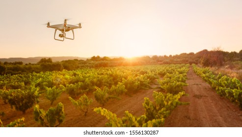 Smart agriculture controlled by Drone over wine vineyards at sunset
