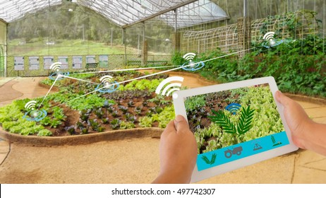 Smart Agriculture and Internet of things in agriculture concept. Farmer using digital tablet application to monitor and control conditions from wireless sensor network in vegetables plant.