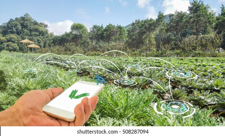 Smart Agriculture and Internet of things in agriculture concept. Farmer using smart phone application to monitor and control conditions from wireless sensor network in vegetables plant.