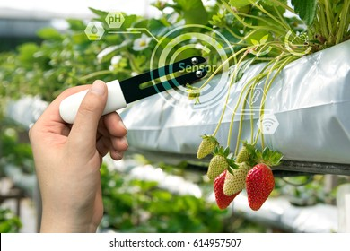 Smart agriculture, sensor concept. Hand holding smart hardware for measure moisture, ph, nitrogen, phosphorus, potassium and sunlight in soil with strawberry farm background and graphic