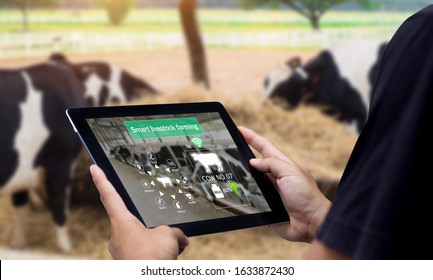 Smart Agritech livestock farming.Hands using digital tablet with blurred cow as background