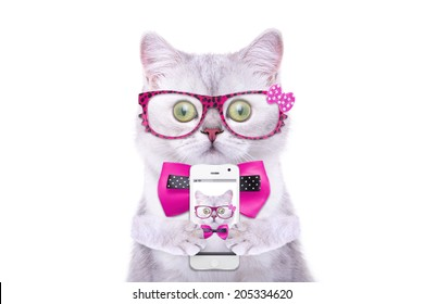 Smart beautiful british cat photographed themselves on the phone. Funny animals. Trendy cat dressed in beautiful clothes