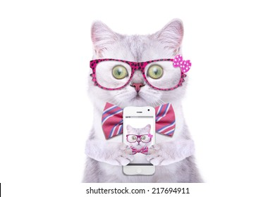 Smart beautiful british cat photographed themselves on the phone. Funny animals. Trendy cat dressed in beautiful clothes. Hipster cat