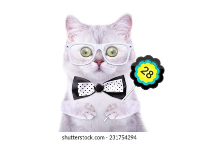 Smart beautiful british cat with a sign. Days of the month. Funny animals. Trendy cat dressed in beautiful clothes
