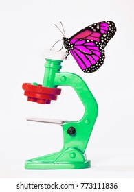 Too smart butterfly. A magenta-colored monarch butterfly, Danaus plexippus, looks at a green toy microscope. Isolated objects on white background.