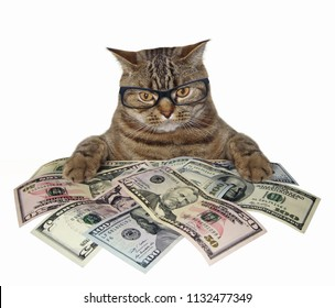 The smart cat in glasses holds american dollars. White background.