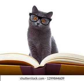 smart cat reading a book