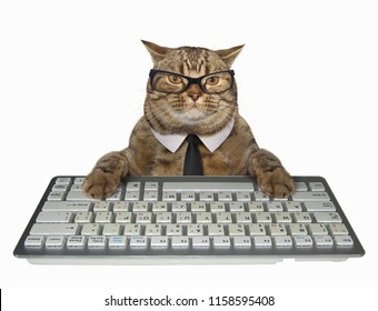 The smart cat in a tie presses the keys of a computer keyboard. White background.