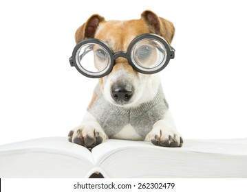 Smart cute puppy scientist wearing glasses and a sweater studying reading book and summary of lectures. preparation for doctoral dissertation
