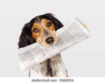 Smart dog fetching the newspaper